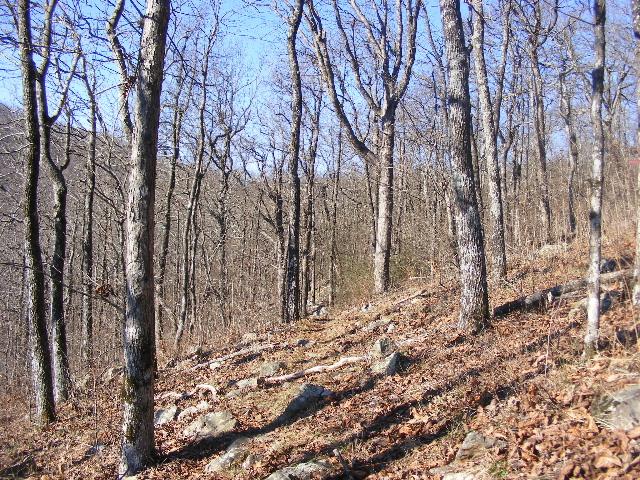 Ouachita Trail 03: Queen Wilhelmina to Hwy 88 (51.6 to 54.1) photo