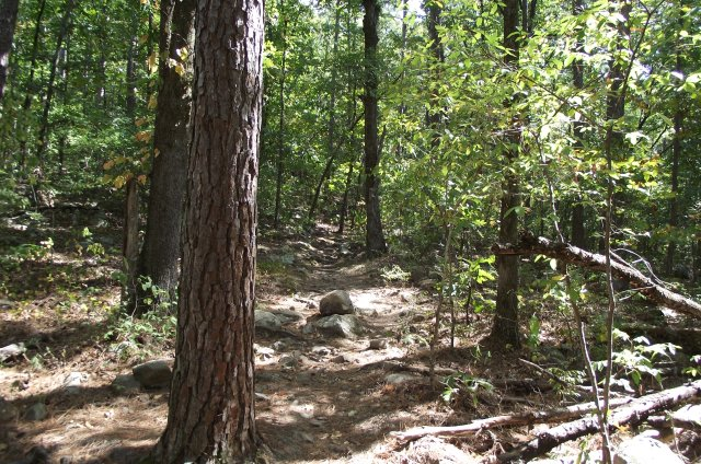 Pinnacle Mountain: Rocky Valley/East Quarry Trails - Pics photo