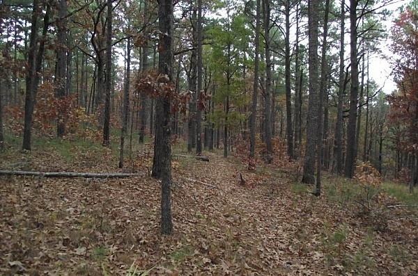 Billy Creek Trail - South Loop (Ouachita Forest) - 7 mi photo
