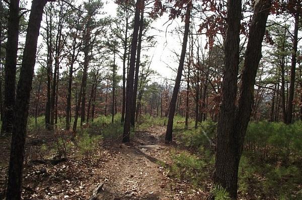Billy Creek Trail - North Loop (Ouachita Forest) - 7mi photo