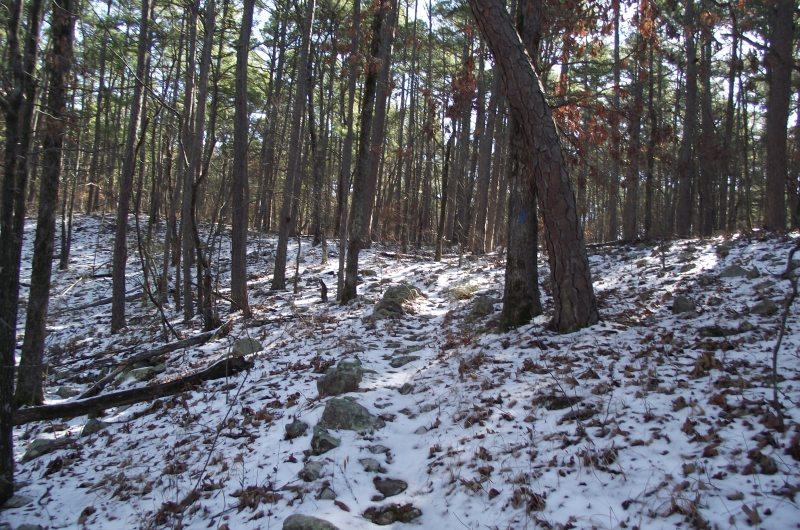 Ouachita Trail 02: Hwy 259 to Pashubbe Trailhead (30.5 to 34.3) photo
