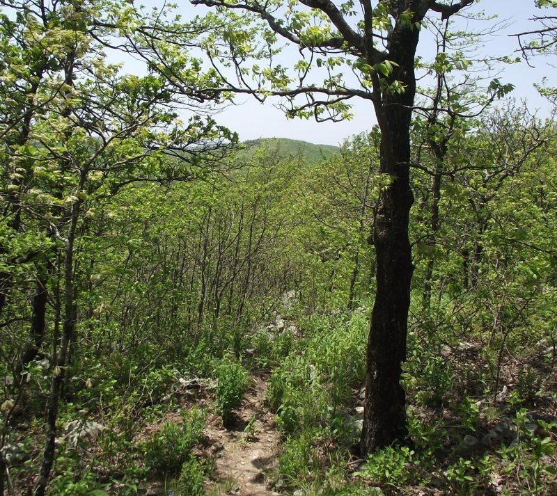 Ouachita Trail 03: MM63 to Foran Gap (63.0 to 68.1) photo