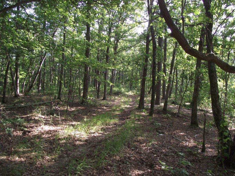 Ouachita Trail 03: Eagle Gap to MM63 (58.5 to 63.0) photo