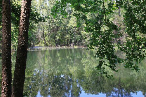 Ponds Trail (Buffalo River) - .5mi photo