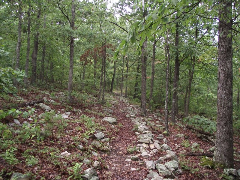 Ouachita Trail 04: MM81 to FR76A (81.0 to 85.5) photo