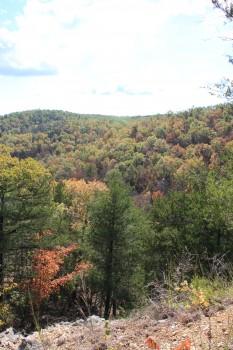Pick a Trail - North Central Arkansas photo