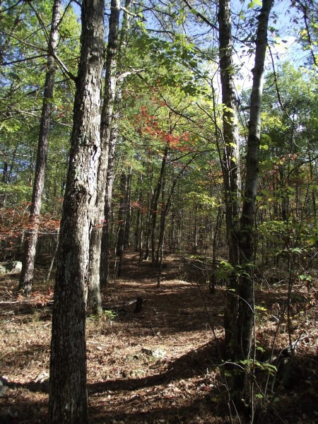 Brushy Creek Loop Trail (Ouachita Forest) - 7 mi photo