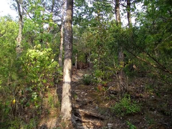 Bull Shoals: Big Bluff Trail - 2mi photo