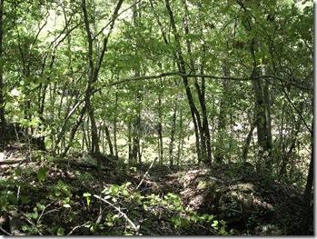Richland Creek Wilderness Hike (Ozark Forest) 2012 photo