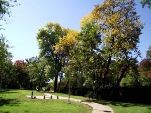 Fall Foliage photo