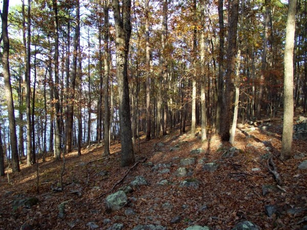 Lake Ouachita: Caddo Bend Trail - 4 mi photo