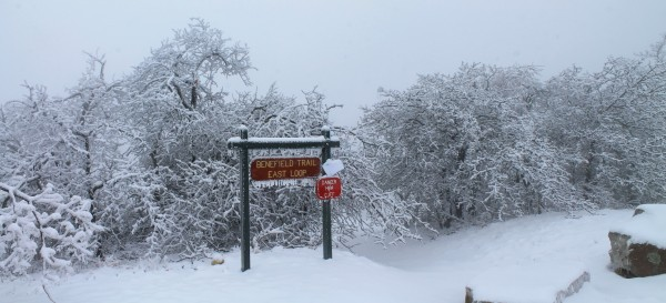 Mt. Magazine: Benefield E. Loop Trail Snow Photos Pt. 2 photo