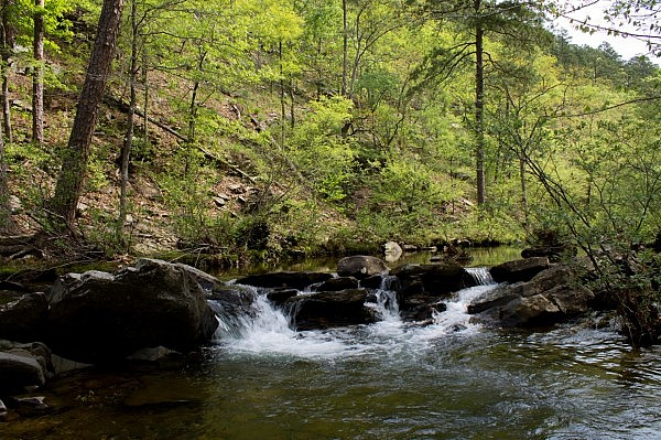 Caney Creek Trail Cascade Video (Ouachita Forest) photo