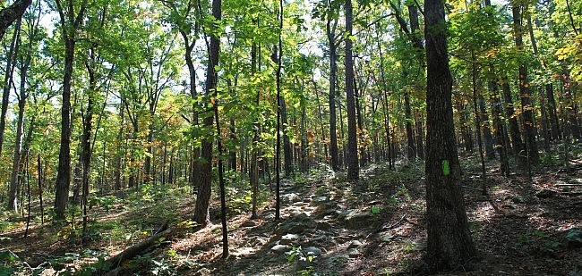 Pinnacle Mountain: Base Trail - 3 mi photo
