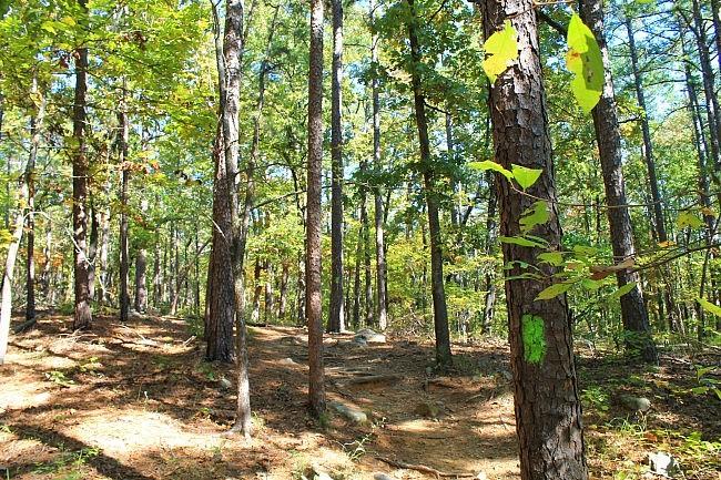 Pinnacle Mountain: Base Trail - 3mi photo