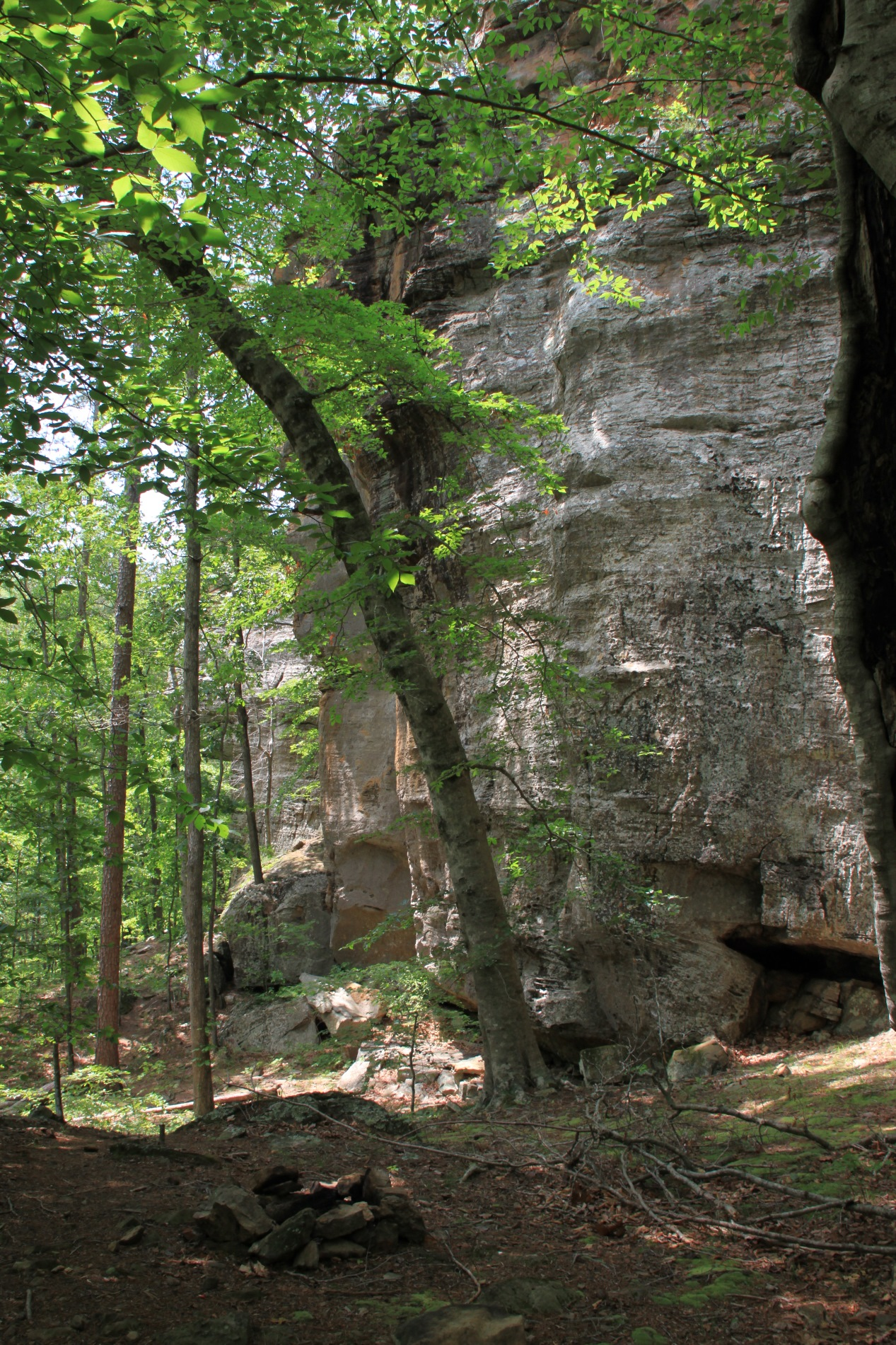 Pam's Grotto (Ozark Fo...