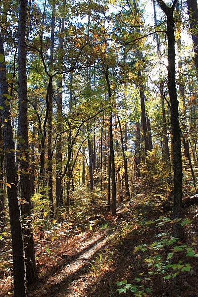 Cedar Lake Trail Fall Pics (Ouachita Forest) photo