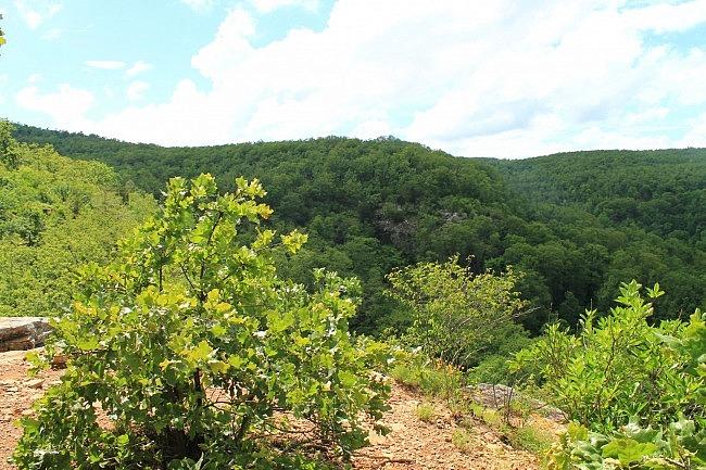 Mount Magazine: Bear Hollow Trail - 5mi (o&b) photo