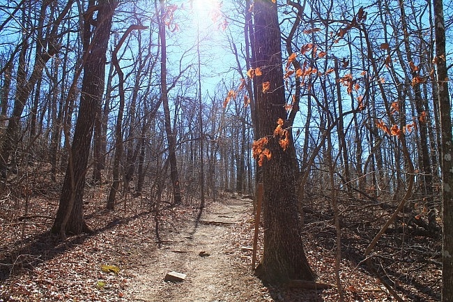 Mount Magazine: Signal Hill (Highpoint) Trail – 1 mi photo