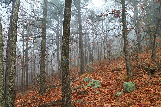 Ouachita Trail 01: Pics of FR 6010 to Deadman's Gap TH (5.8 – 8.0) photo