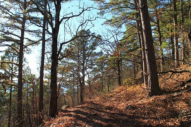 Ouachita Trail 02: Pics of Pashubbe TH to Kiamichi River TH (Wilton Mtn.) (34.3 - 39.2) photo