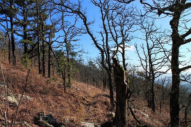 Ouachita Trail 02: Winding Stair TH to Highpoint to Saddle (23.7 to 26.3) photo