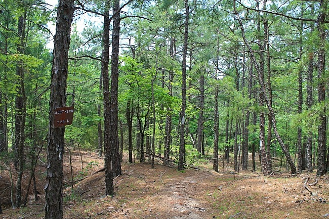 Earthquake Ridge Trail Pics (Ouachita Forest) photo