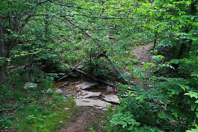 Mount Magazine: North Rim Trail Pics photo