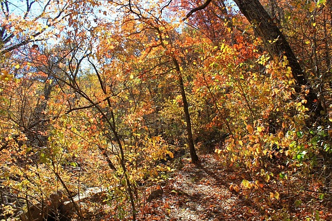 Lake Tenkiller: Buzzard Roost Trail Fall Pics photo