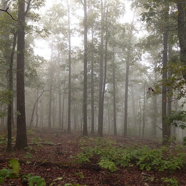 Hunt's Loop Trail (Ouachita Forest) - 4 mi photo